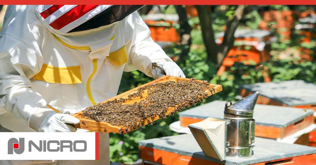 nicro-progetto-apicoltura-urbana
